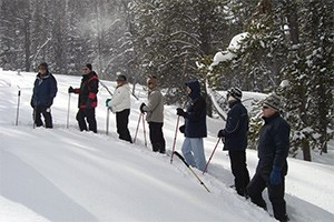 Yellowstone Safari - Snowshoe treks :: Join us for a unique adventure: explore Yellowstone's winter wonderland on snowshoes. Watch wildlife, find animal tracks, listen for a wolf's howl. Half-day in length.