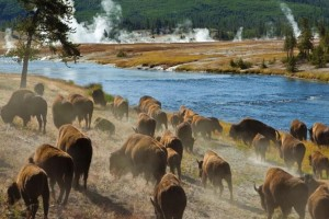 Yellowstone Alpen Guides Park Tours :: Individual and daily tours of Yellowstone, ideal for photographing wildlife, park scenery and natural attractions. Offered different times throughout each day.