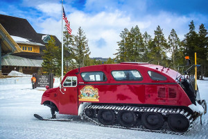 Yellowstone Alpen Guides - Year-Round Park Tours
