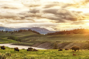 Off the Beaten Path - Essence of Yellowstone