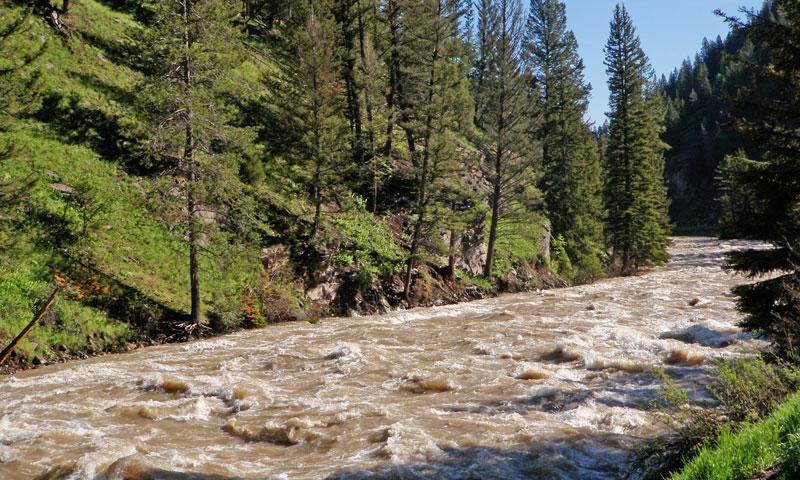 Flooding Gallatin River just outside Yellowstone National Park