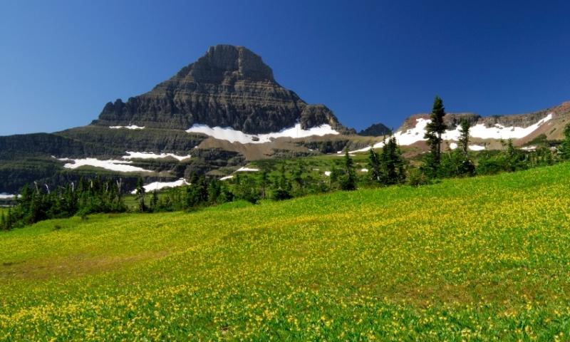Glacier National Park Hanging Garden