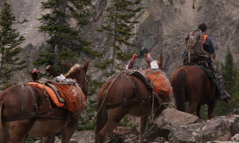 Pack Trip to Wolf Creek Camp near Big Sky Montana